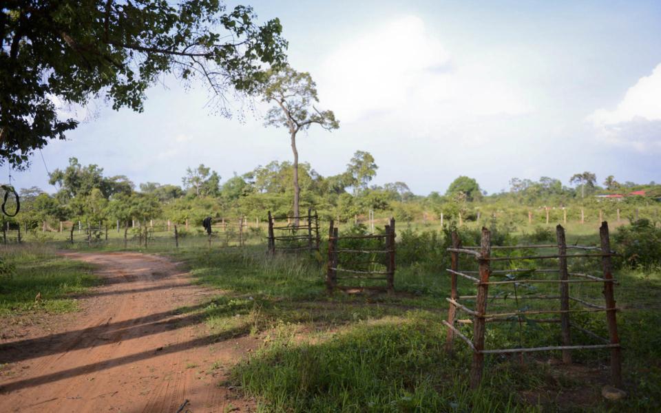 13_Mangobäume