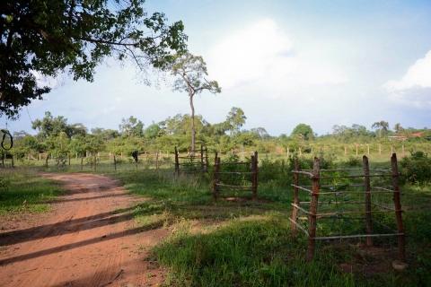 BeeBob-Grundstück-Kambodscha013